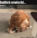 Hund-hat-Erfolg.jpg auf www.funpot.net