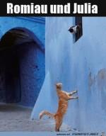 Katzen-Romeo-und-Julia.jpg auf www.funpot.net