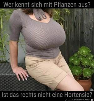 Wer-kennt-sich-mit-Pflanzen-aus?.jpg auf www.funpot.net