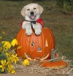 Kürbis-Hund.jpg auf www.funpot.net