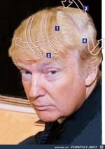Trump-Geheimnis-der-Frisur.jpg auf www.funpot.net