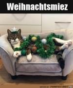 Katze-mit-Weihnachtsdeko.jpg auf www.funpot.net
