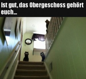 Katzen-annektieren-oberes-Stockwerk.jpg auf www.funpot.net