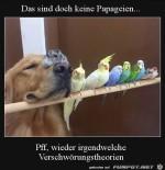 Das-sind-doch-keine-Papageien.jpg auf www.funpot.net