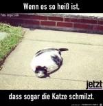 Die-Katze-schmilzt.jpg auf www.funpot.net
