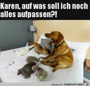 Hund-als-Babysitter.jpg auf www.funpot.net