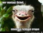 Montags-lächeln.png auf www.funpot.net