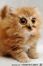 kunstvolle-Katze.jpg auf www.funpot.net