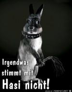Hasi-sieht-komisch-aus.jpg auf www.funpot.net