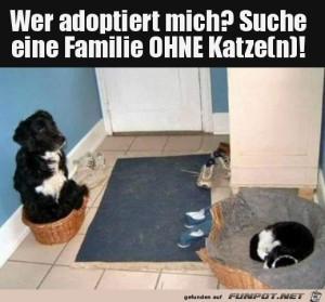 Suche-Familie-ohne-Katze.png auf www.funpot.net