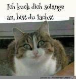 Ich-guck-dich-so-lange-an.jpg auf www.funpot.net