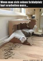 Super-Schlafplatz-für-die-Katze.jpg auf www.funpot.net