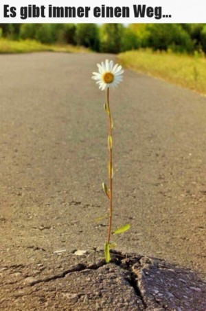 Es-gibt-immer-einen-Weg.jpg auf www.funpot.net