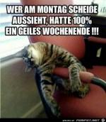 Wer-am-Montag-schei...-aussieht.jpg auf www.funpot.net