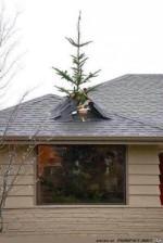 Der-Weihnachtsbaum-steht.jpg auf www.funpot.net