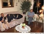 wenn-das-große-Schwein-auf-dem-Sofa-Platz-nehmen-darf....jpg auf www.funpot.net