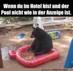 Der-Pool-ist-nix.jpg auf www.funpot.net