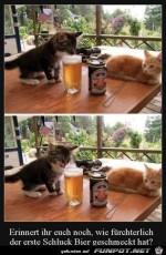 Der-erste-Schluck-Bier.jpg auf www.funpot.net