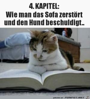 Katzenfibel.jpg auf www.funpot.net