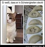 Katze-mit-schlechtem-Gewissen.jpg auf www.funpot.net