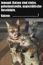 Katzen-sind-frech.jpg auf www.funpot.net