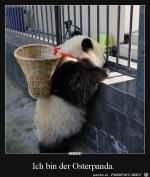 Niedlicher-Panda.jpg auf www.funpot.net