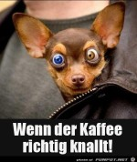 Starker-Kaffee.jpg auf www.funpot.net