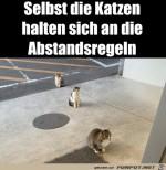 Katzen-halten-Abstand.jpg auf www.funpot.net