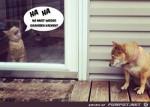 Fiese-Katze.jpg auf www.funpot.net