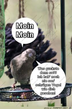 Schraeger-Vogel.jpg auf www.funpot.net