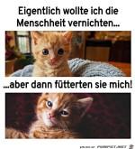 Lustiger-Katzenblick.jpg auf www.funpot.net