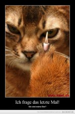 Katze....jpg auf www.funpot.net