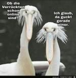 Ob-die-Verrückten-schon-online-sind?.jpg auf www.funpot.net