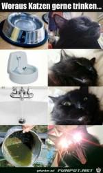 Voraus-Katzen-gerne-trinken.jpg auf www.funpot.net