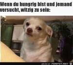 Hund-hat-Hunger.jpg auf www.funpot.net