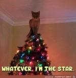 Ich-bin-der-Star-oder-Stern.jpg auf www.funpot.net