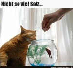 Nicht-soviel-Salz.jpg auf www.funpot.net
