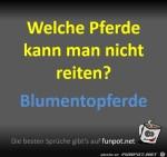 Welche-Pferde-kann-man-nicht-reiten?.jpg auf www.funpot.net