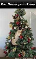 Der-Baum-gehört-den-Katzen.jpg auf www.funpot.net