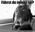 Dein-Fahrstil-macht-mir-Angst.png auf www.funpot.net