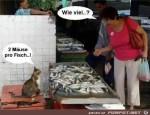 Fisch-verkauf.jpg auf www.funpot.net