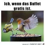 Am-Gratis-Buffet.png auf www.funpot.net