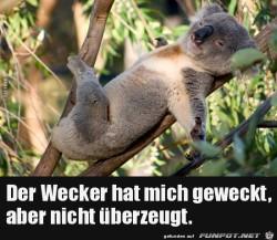 der-Wecker-hat-mich-geweckt......jpg auf www.funpot.net
