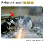 Undercover.jpg auf www.funpot.net