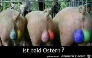 Ist-bald-Ostern?.jpg auf www.funpot.net