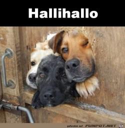 Hallihallo.jpg auf www.funpot.net