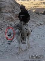 der-neue-BMW-ist-da.jpg auf www.funpot.net