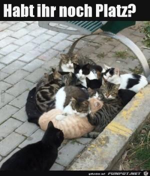 Katzen-Auflauf.jpg auf www.funpot.net