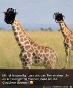 Tier-erraten.jpg auf www.funpot.net