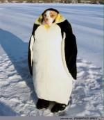Verkleideter-Pinguin.jpg auf www.funpot.net